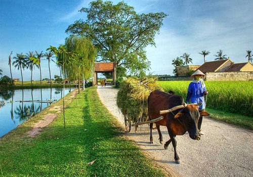 Duong Lam Village Biking Tour Full Day